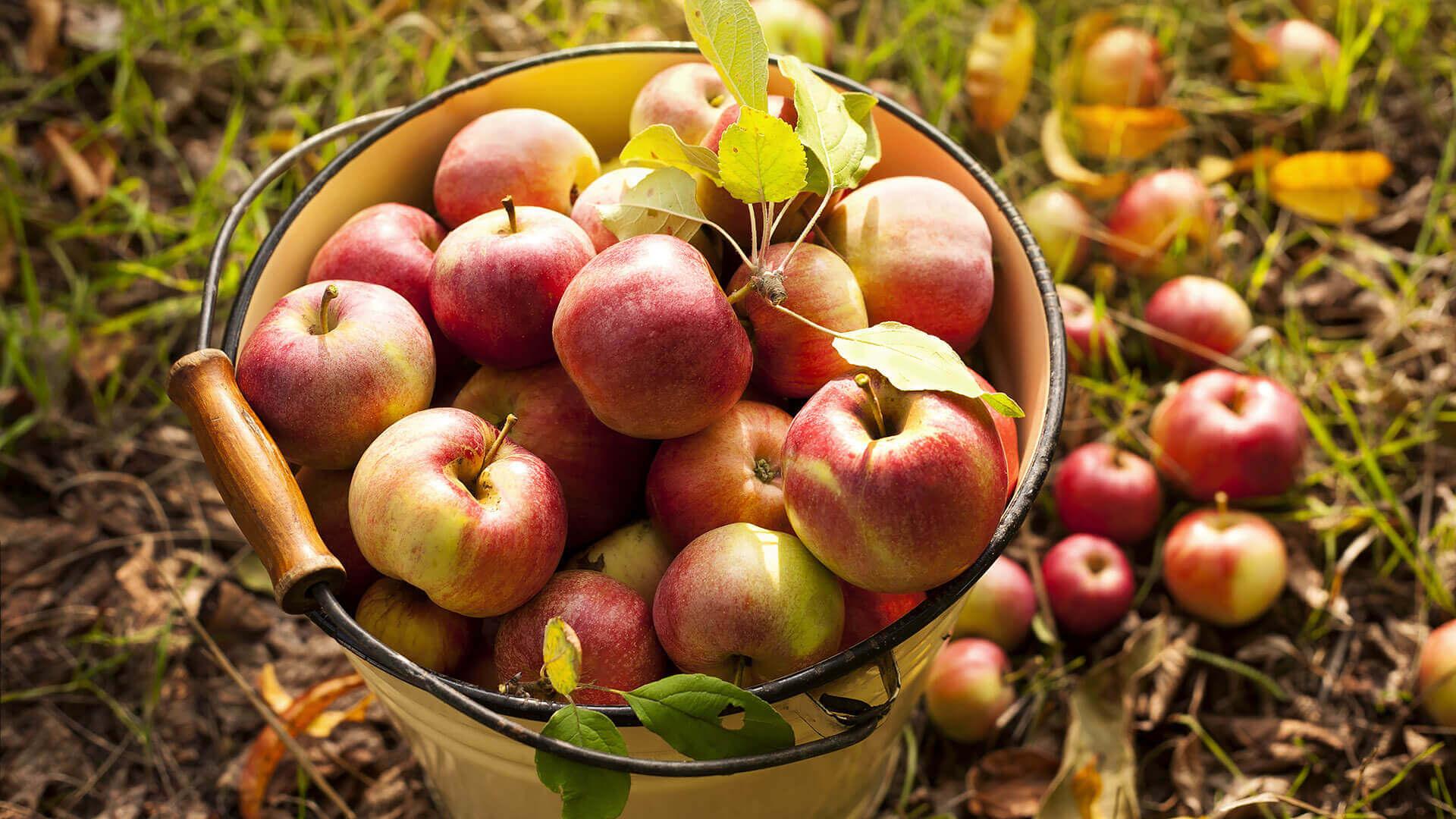 Basket Of Red Apples